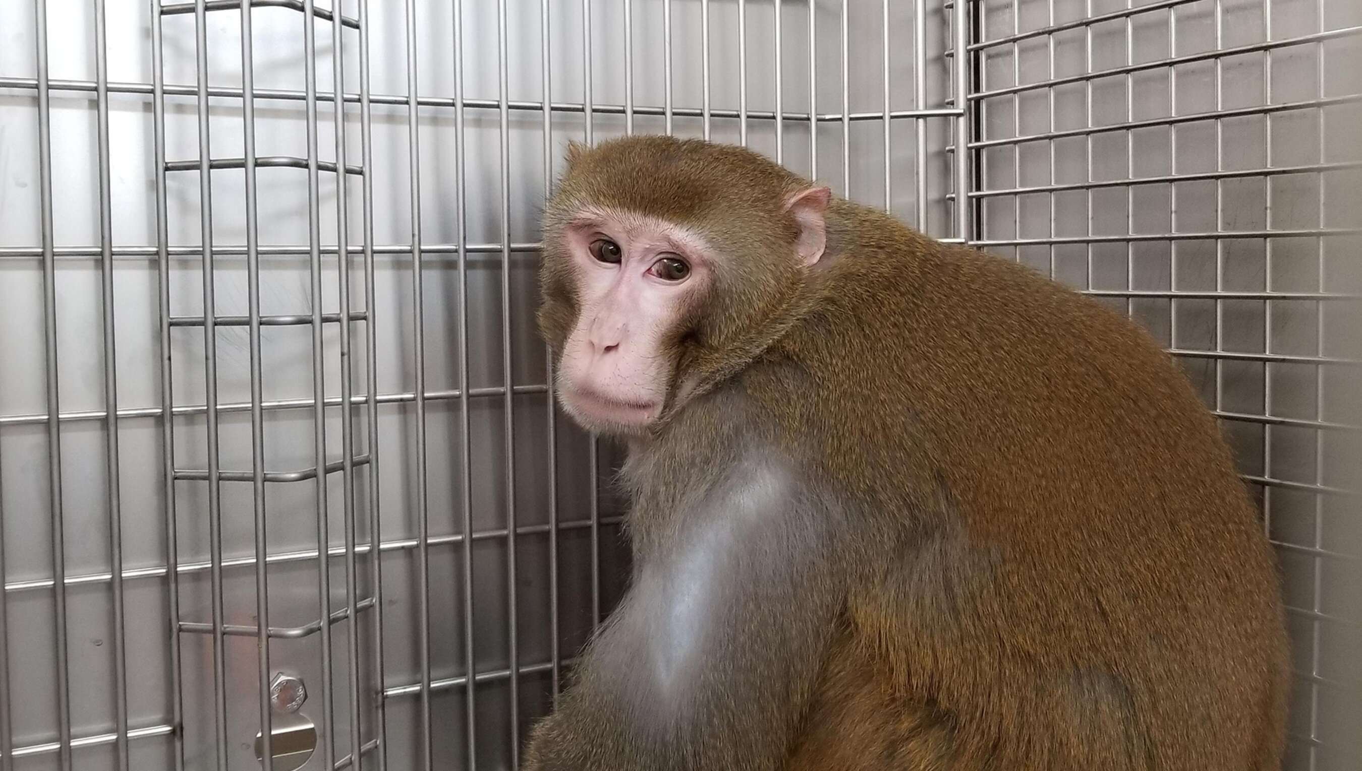 My cancer scars map the pain of animals held in research labs | Psyche